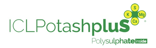 ICL PotashpluS is a new granular fertilizer formulated using a combination of potash and Polysulphate