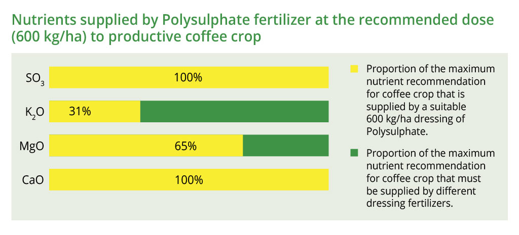 Nutrients supplied by Polysulphate at the recommended dose (600 kg/ha) to coffee crop